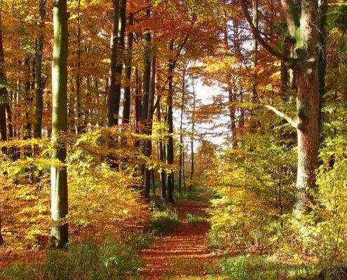 Holz ist ein nachwachsender Rohstoff